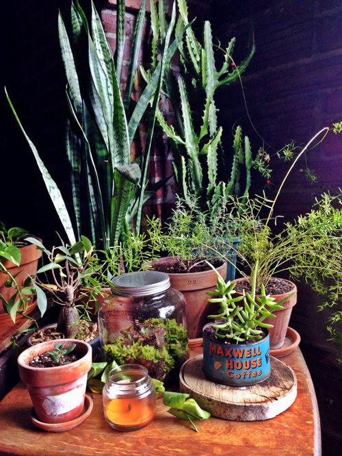 decor_with_plants_LiveLoveCreateInspire_