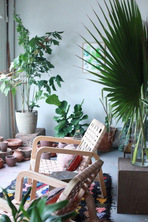 plant display10