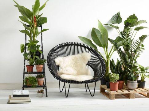 plant display11