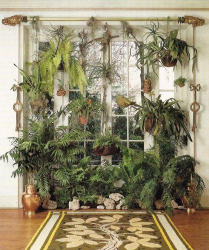 plant display12