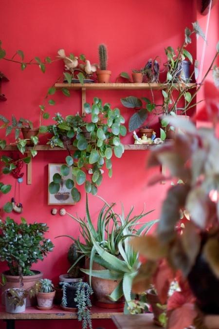 plant display15