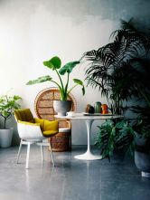 plant display16