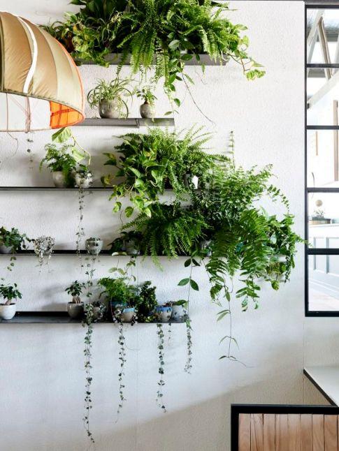 plant display18