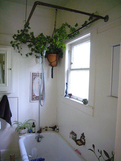 plant display20