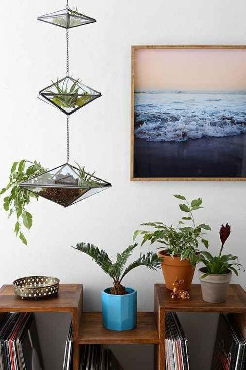plant display9